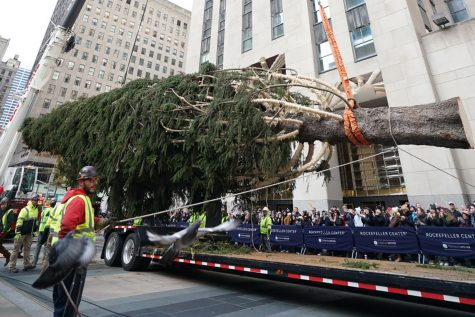 Say hello to this year's Rockefeller Center Christmas tree