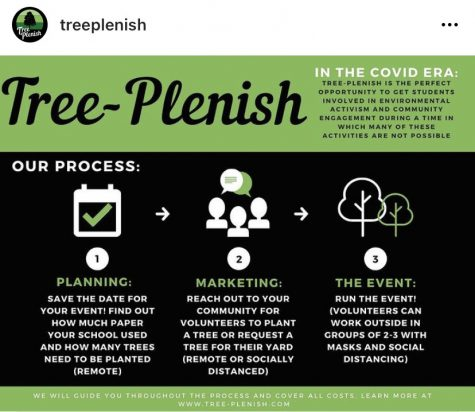 SPFHS goes green with Tree Plenish